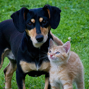 Animal Care Services | City of Corpus Christi
