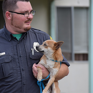 Animal Care Officer with Dog