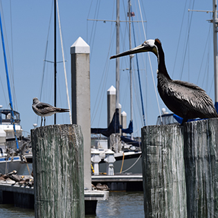 birds near marina